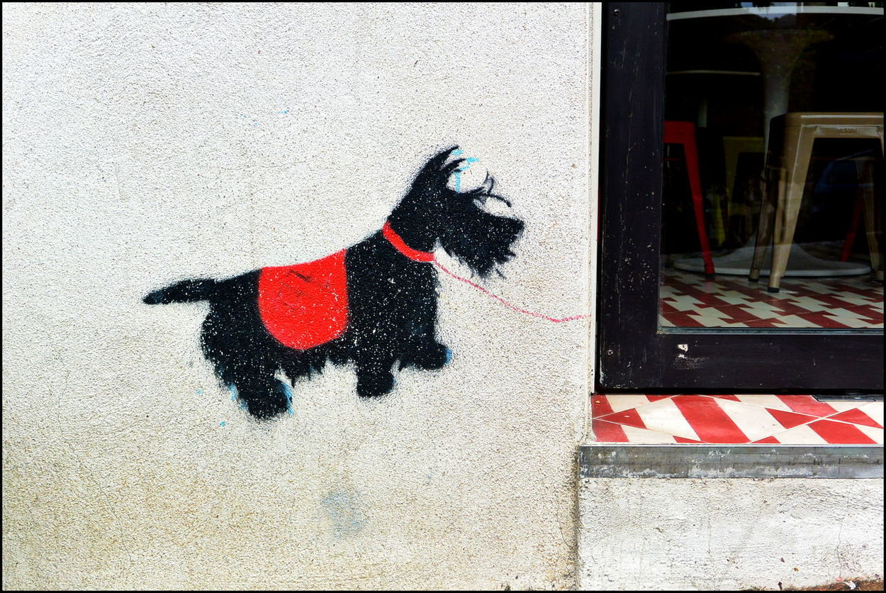 One of these interesting walls in Paris Art Dog Picture Little Black Dog Scottish Terrier Terrier Wall Art Walls Of Paris Watch The Walls