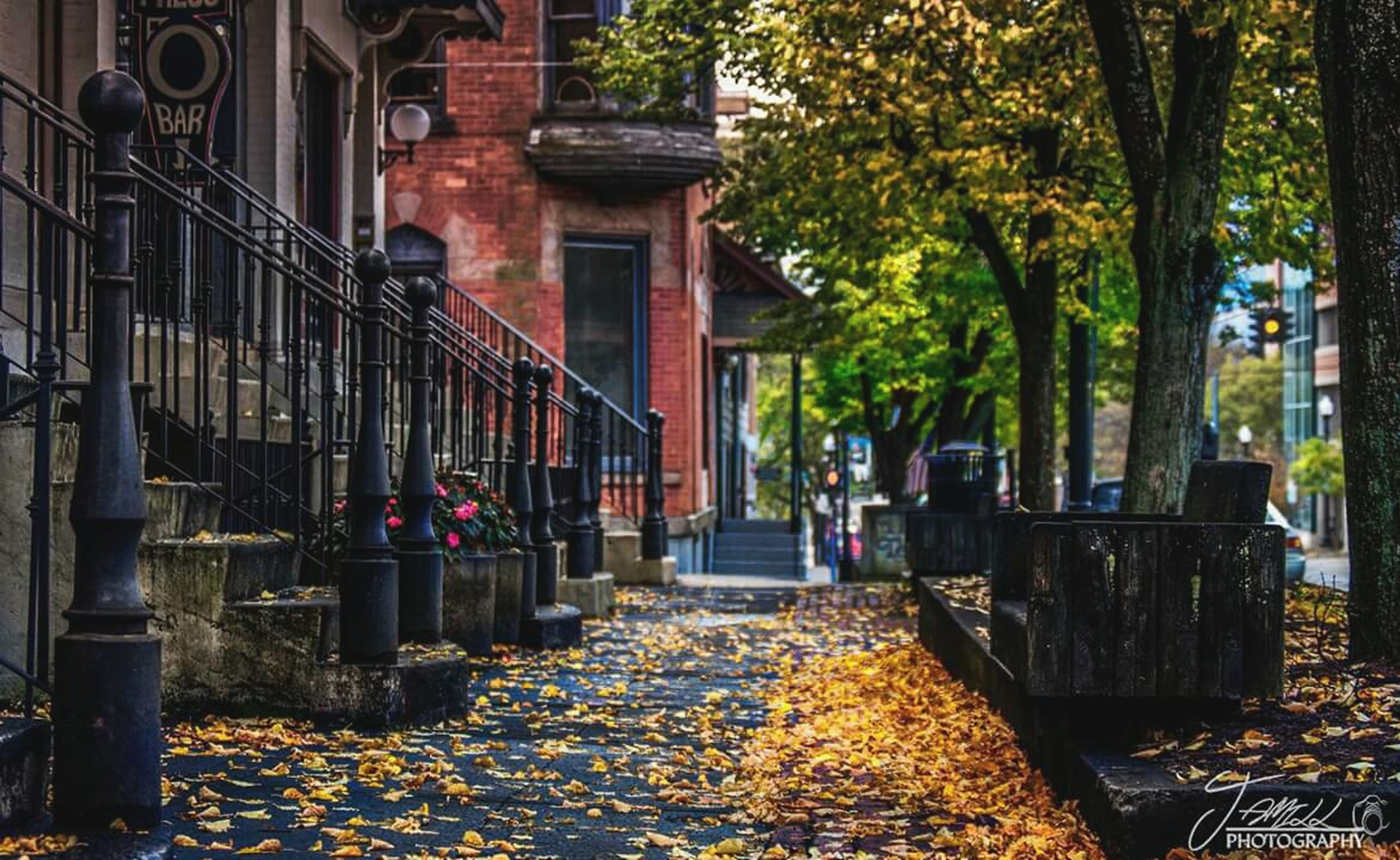 tree, men, autumn, built structure, building exterior, architecture, person, lifestyles, the way forward, walking, leisure activity, change, street, footpath, rear view, outdoors, city, day, season
