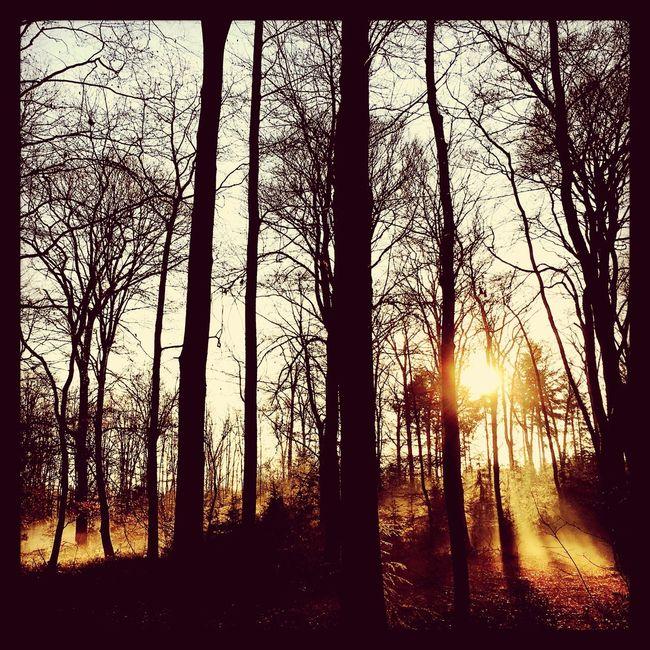 Veluwe Thenetherlands Holland View Woods Epe