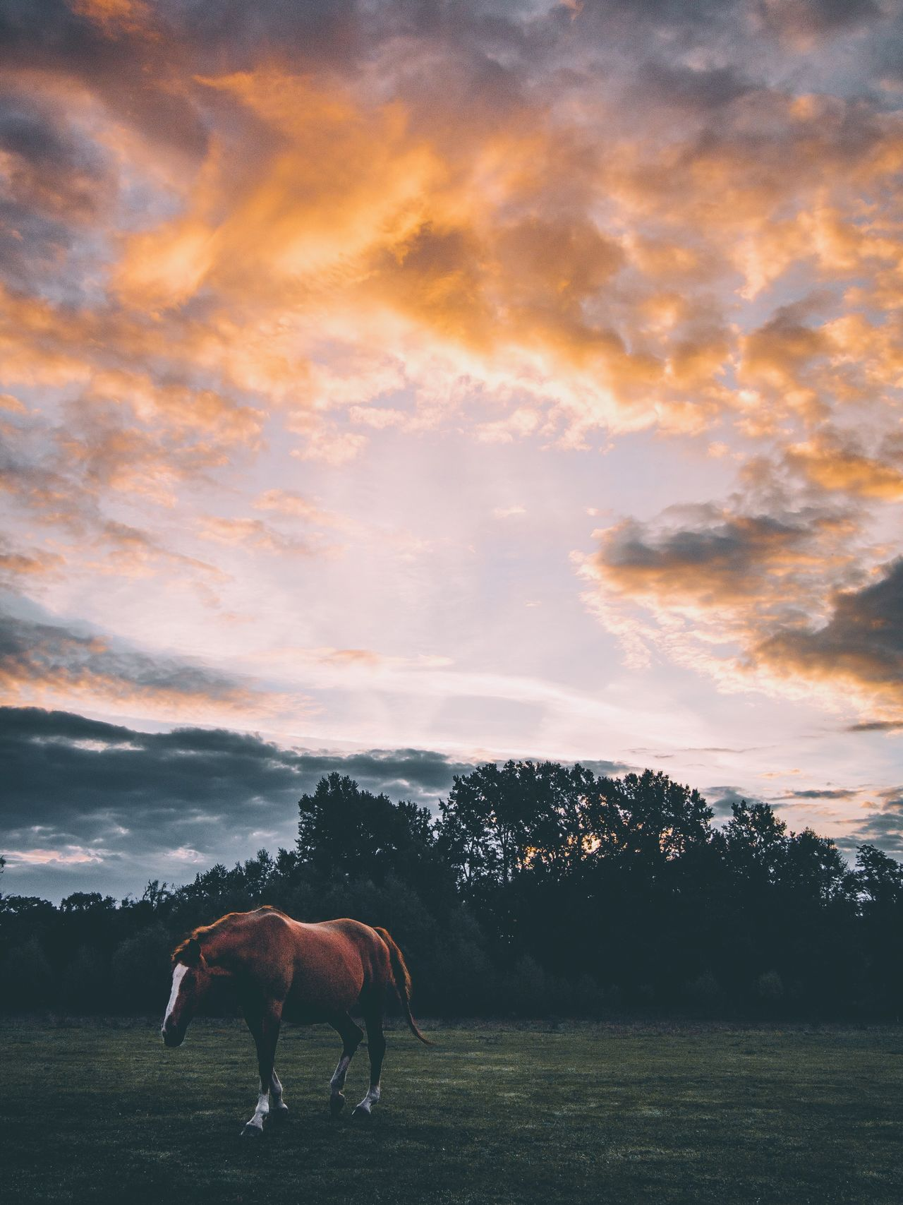 Animal Themes Domestic Animals Horse Livestock Field Mammal Sky Two Animals Herbivorous Grazing Working Animal Full Length Cloud - Sky Tranquil Scene Tranquility Cloud Pasture Nature Day Outdoors