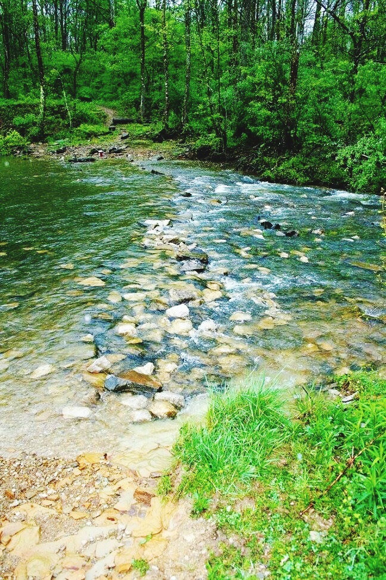 Creek crossing Rocks Rock Rocks And Water Tree Green Brook Stream Creek Nature Water_collection Water Creek Crossing Water Crossing Flowing Water Flowing Flowing Stream Flowingwater Photography Flowingwater Flowing Water In A Creek