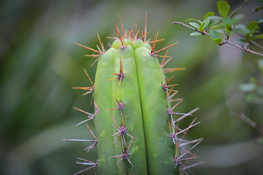 Spine Cactus EyeEm Cactus Hugging A Tree Colors EyeEm Best Shots - Nature Nature_collection EyeEm Nature Lover Photography Details