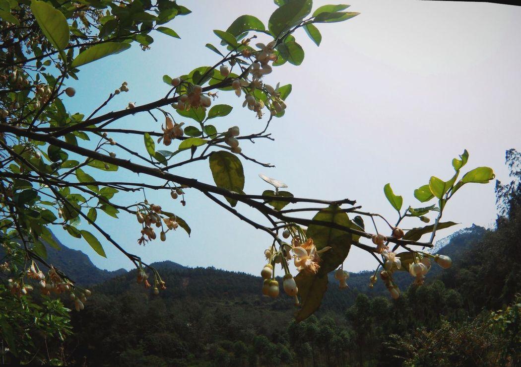 Flowertree Hometown PhonePhotography Daytime
