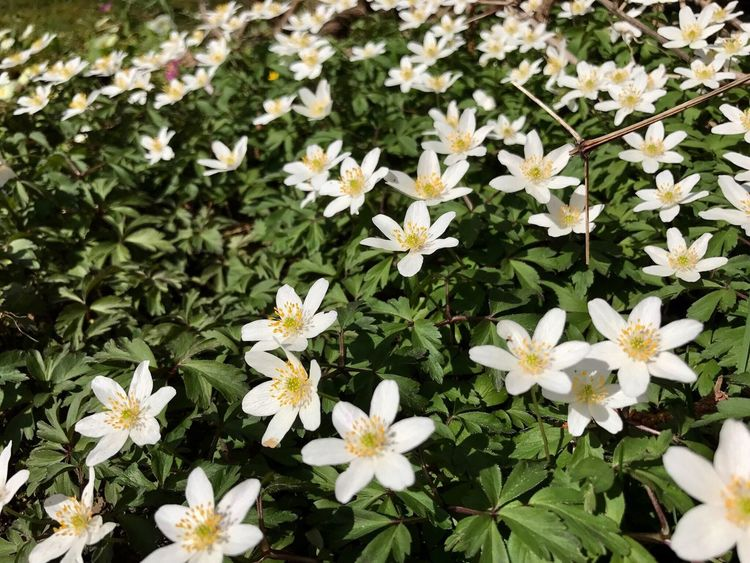 Flower Growth Nature White Color Blooming Plant Flower Head Beauty In Nature Green Color Leaf Outdoors Plant Spring Spring Flowers Beauty In Nature Nature Growth Green Color