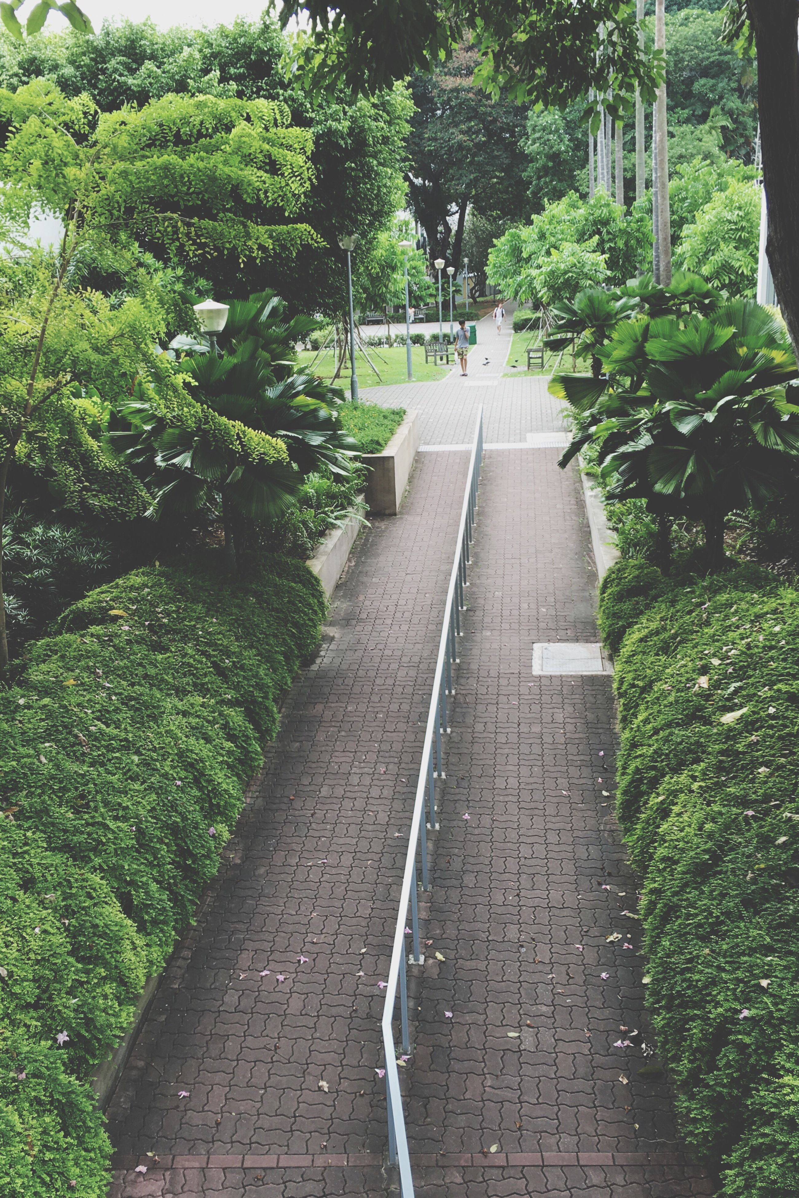 tree, the way forward, green color, growth, plant, park - man made space, steps, footpath, built structure, sunlight, formal garden, walkway, nature, no people, lush foliage, architecture, steps and staircases, railing, diminishing perspective, day