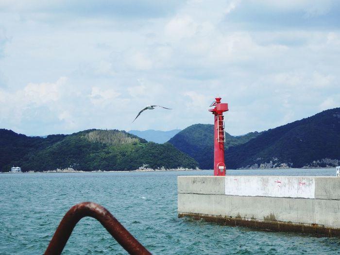 Japan Kashirajima 頭島 Summer Summerdays  Sea Seaside Sea And Sky Seabirds EyeEm Nature Lover