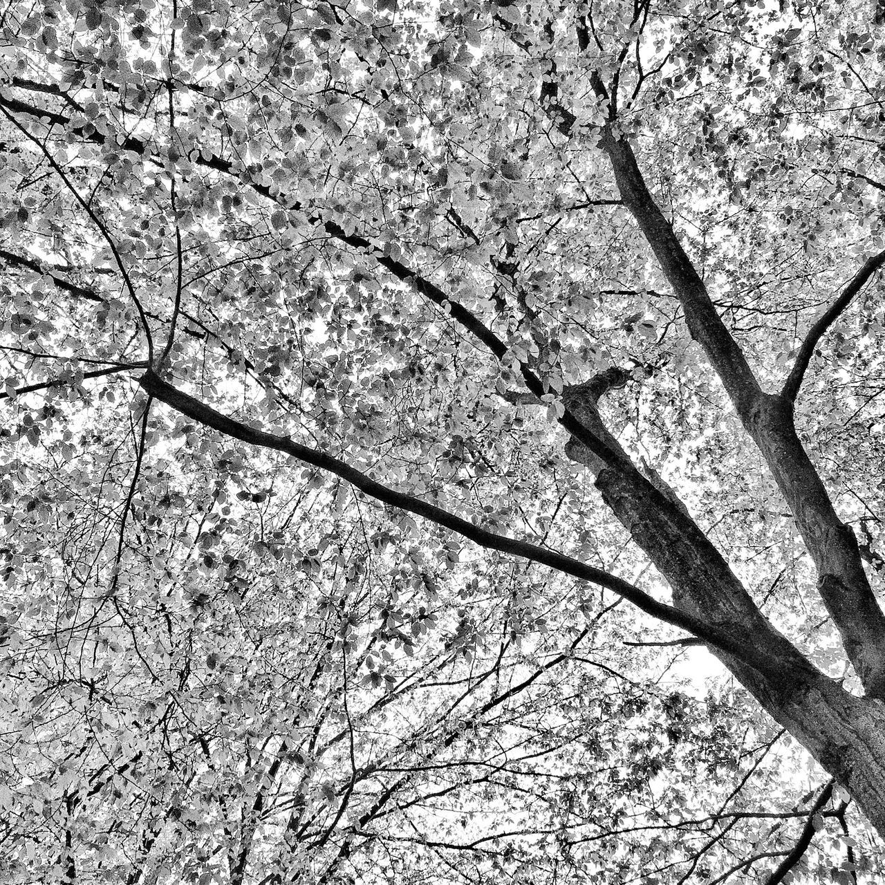 Branch Tree Nature No People Day Outdoors Growth Beauty In Nature Backgrounds Close-up Freshness The Great Outdoors - 2017 EyeEm Awards