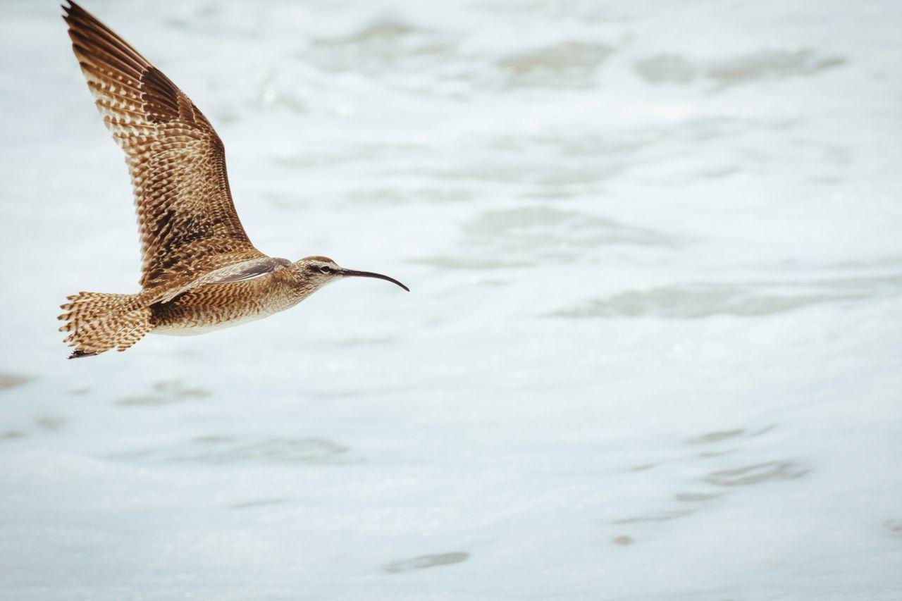 Beautiful stock photos of birds, Animals In The Wild, Arid Climate, Beach, Bird