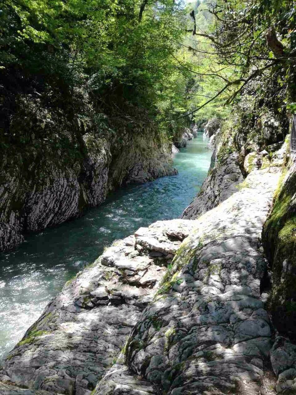 Тисо-самшитовая роща. Абхазия. Hello World Enjoying Life Popular Photo Abhazia Beautiful Природа