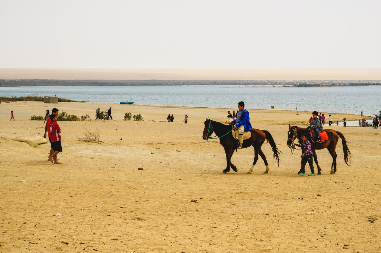 Arabian Horse Beach Beauty In Nature Clear Sky Day Desert Desert Domestic Animals Horizon Over Water Horse Horse Racing Horseback Riding Large Group Of People Lifestyles Mammal Men Nature Outdoors Real People Sand Scenics Sea Sky WADI El-Rayan, Fayoum, Egypt Water Live For The Story BYOPaper! The Street Photographer - 2017 EyeEm Awards The Great Outdoors - 2017 EyeEm Awards