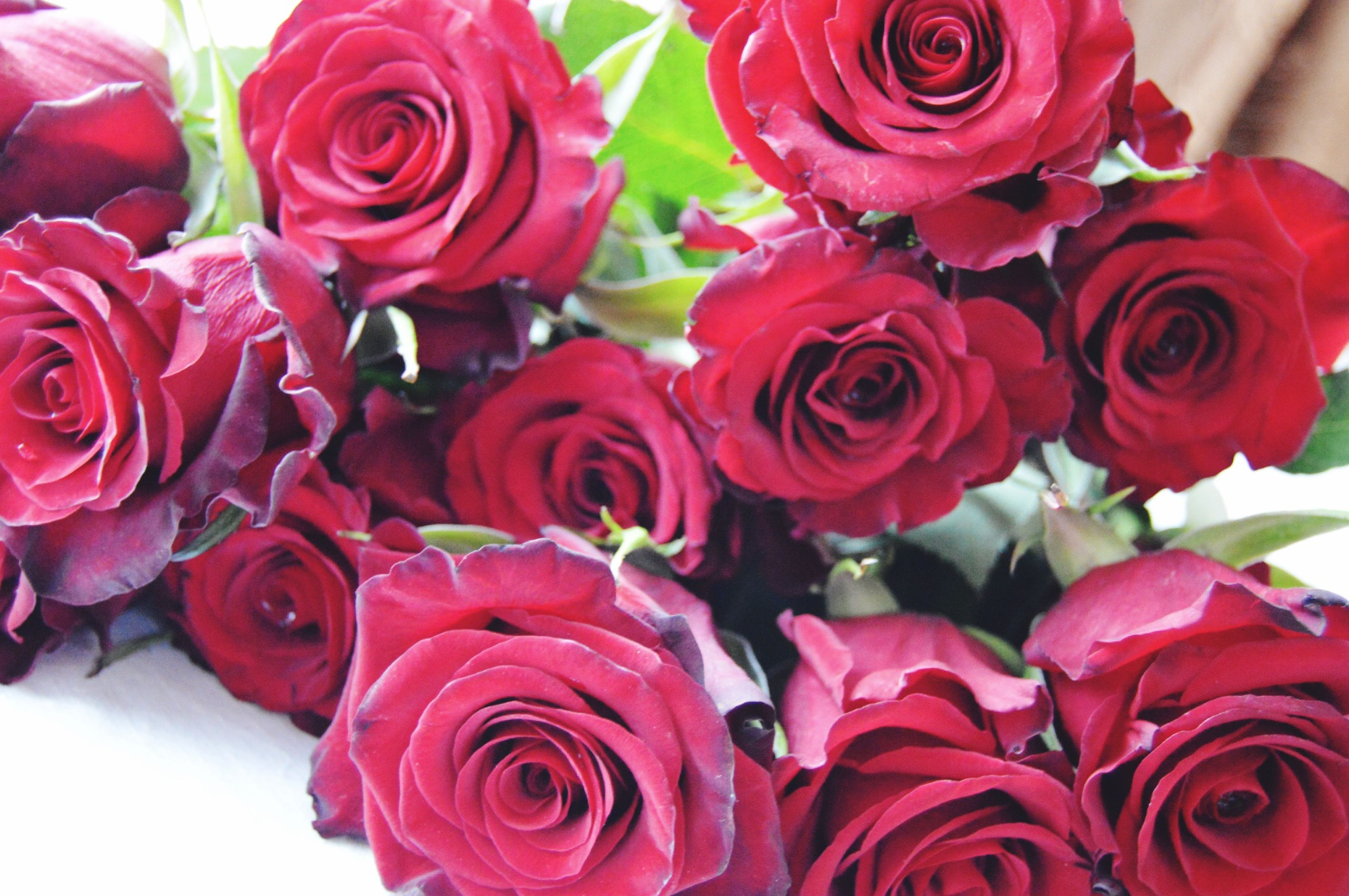 flower, freshness, petal, rose - flower, fragility, flower head, beauty in nature, red, pink color, rose, close-up, indoors, nature, bouquet, growth, blooming, tulip, bunch of flowers, full frame, plant
