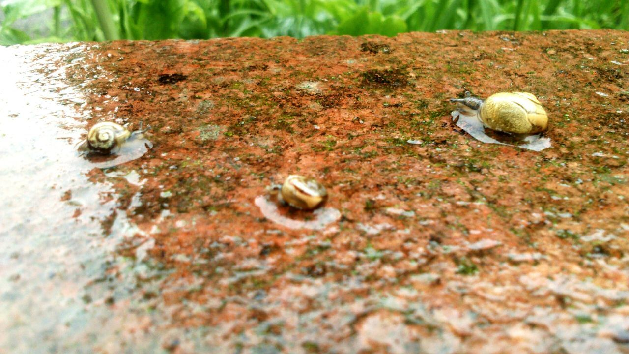 Wet Wall Snail On The Wall Wall Wet Day Rainy Day Wet Rainy Rain Snail Collection Nature Nature_collection Nature Photography Nature On Your Doorstep Snail Slimy Slimy Snails Snail Shell Shell Concrete Wall Snails Little Snail Multi Colouredbackground Gastropoda Swimming Mollusca