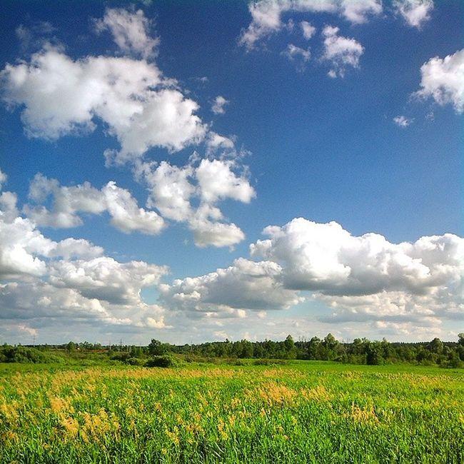 Russia Spring Sky Bluesky Landscape Sun Sunday Nofilter Россия поле русскоеполе просторы небо небоголубое весна Хорошо красиво Green облака облако Clouds Skyscraper Skyporn