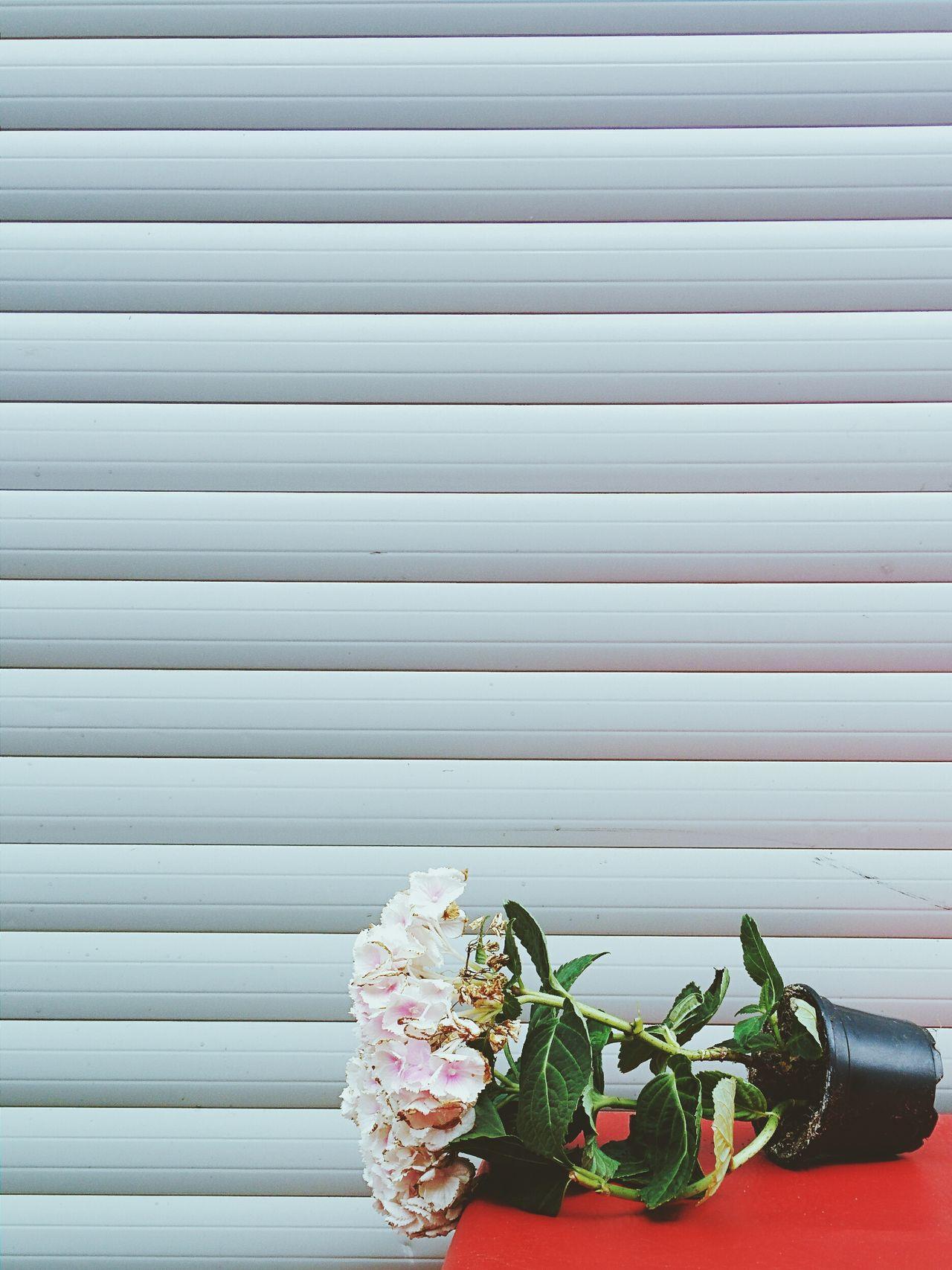 Beautiful stock photos of white, Berlin, Close-Up, Falling, Flower
