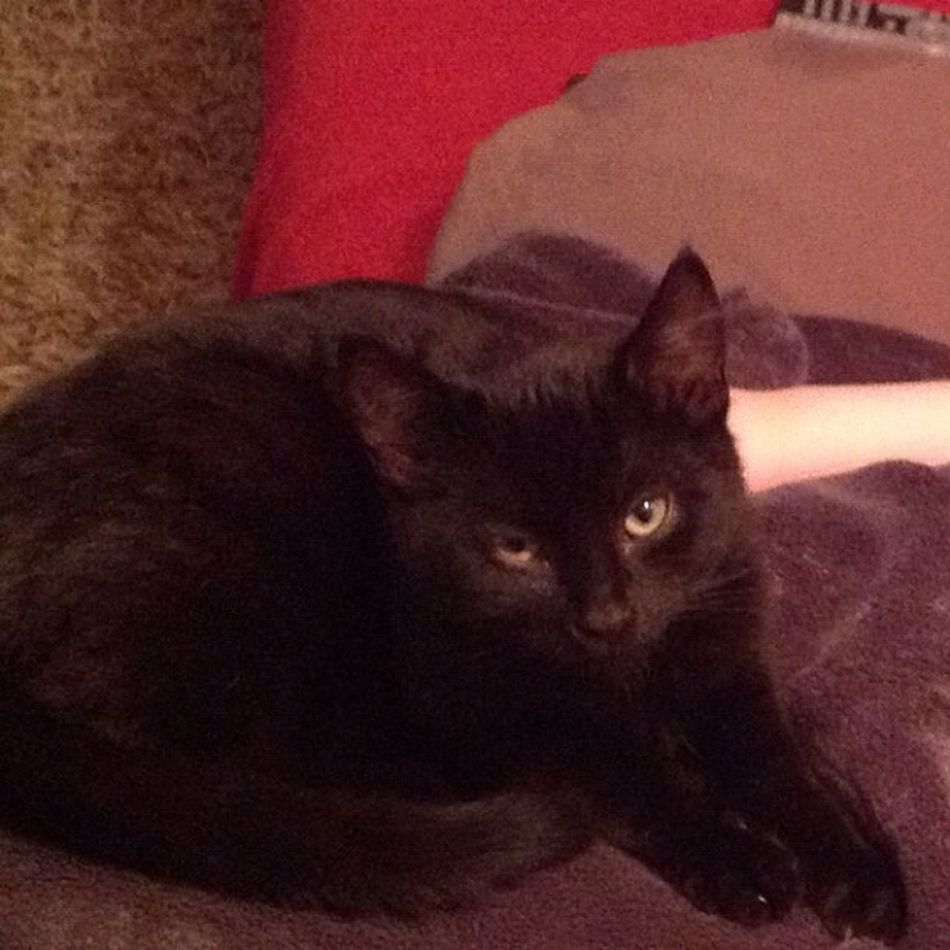 Cat Katze Sklfamily