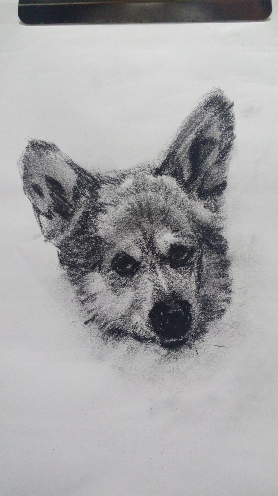 Boceto. Dog Charcoal Gallery Artistic Expression Draw Sketchbook Grafito Contemporary Drawing, Painting, Artwork Charcoal Drawing Sketchart Dibujo First Eyeem Photo Blanco Y Negro Black & White