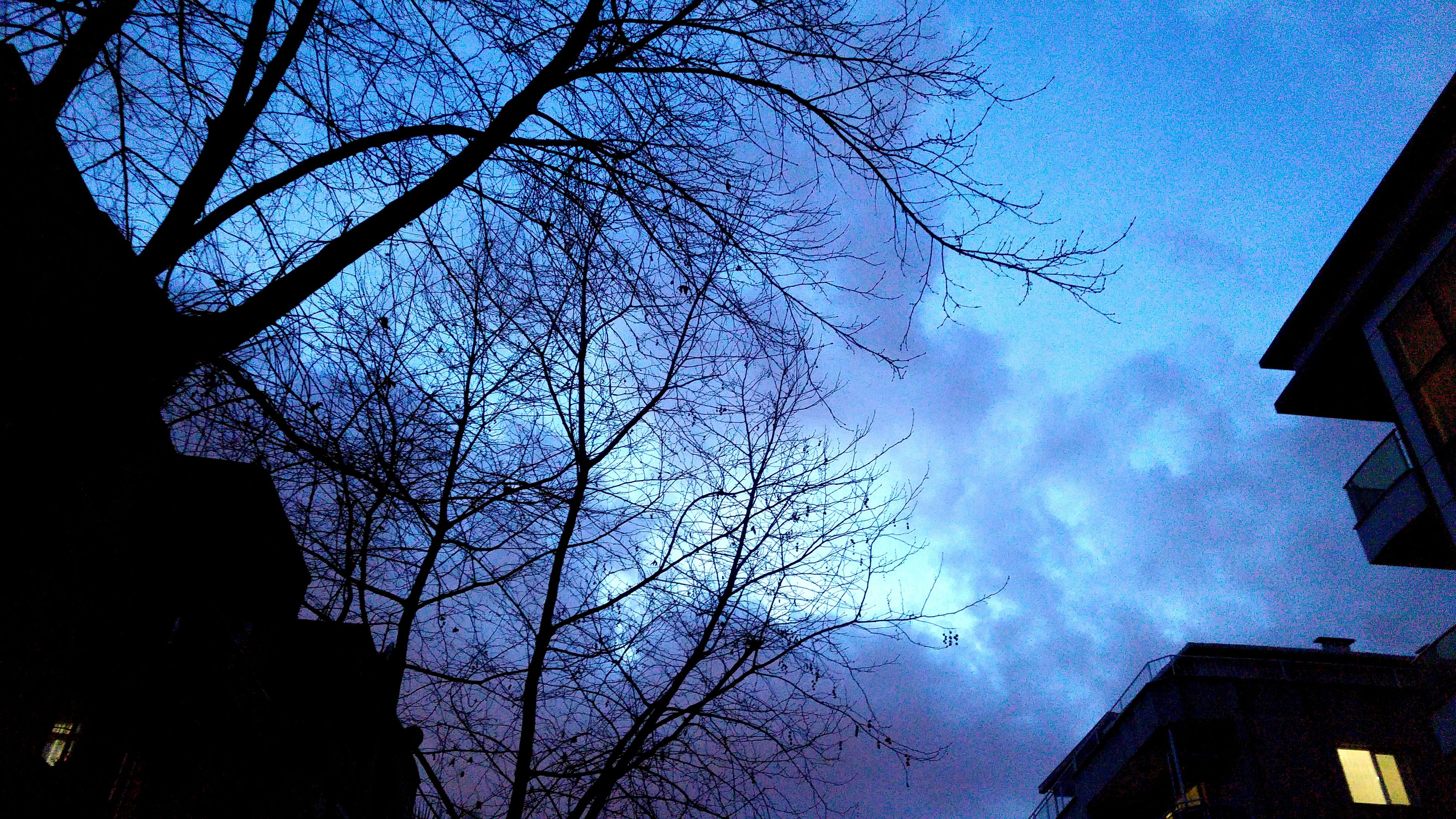 low angle view, building exterior, architecture, built structure, bare tree, tree, sky, branch, blue, silhouette, building, cloud - sky, city, residential building, house, outdoors, residential structure, nature, high section, no people