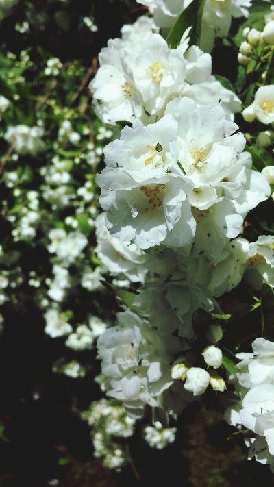 Flowers Beautiful Like Galaxys4