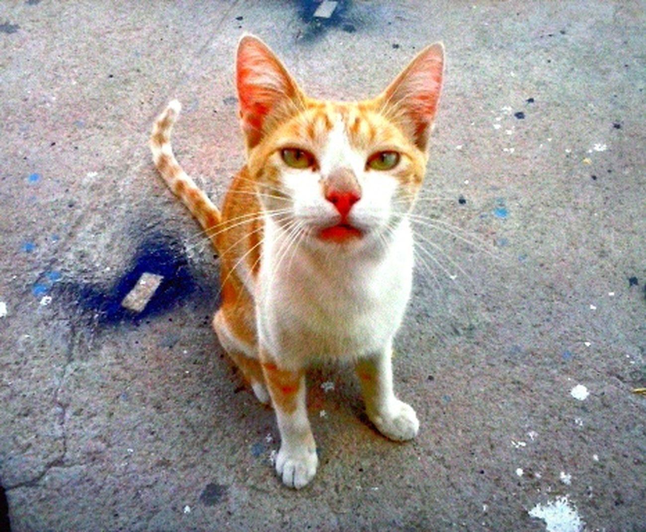Cat , Wild , Observing .