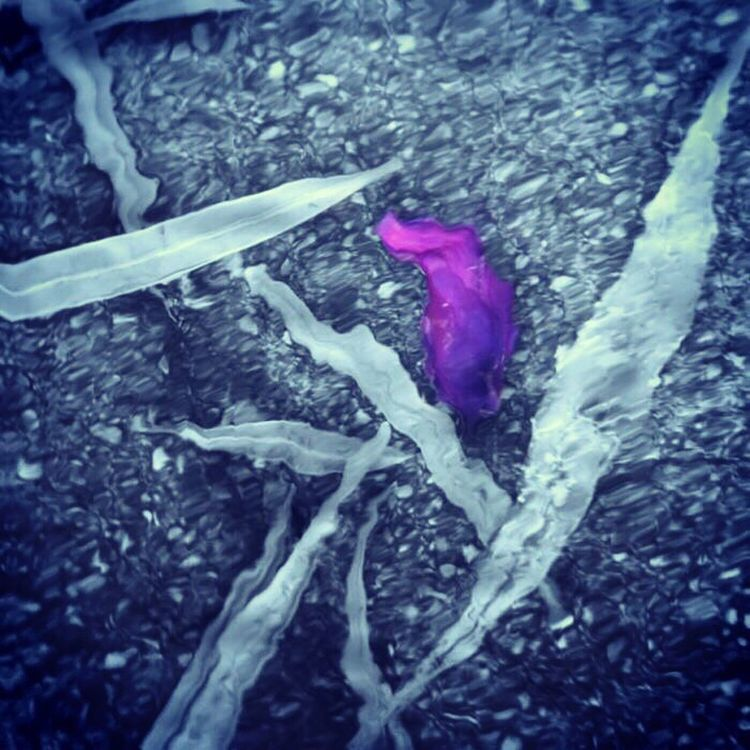 Fallen leaves Check This Out Taking Photos Relaxing Enjoying Life Cool Iphonephotography Home Is Where The Art Is A Touch Of Colour Underwater Photography Underwater Purple Flower Petal Pivotal Ideas