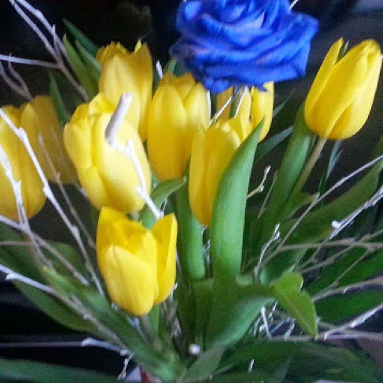 Blaurose Tulpen голубая_роза желтыетюльпаны