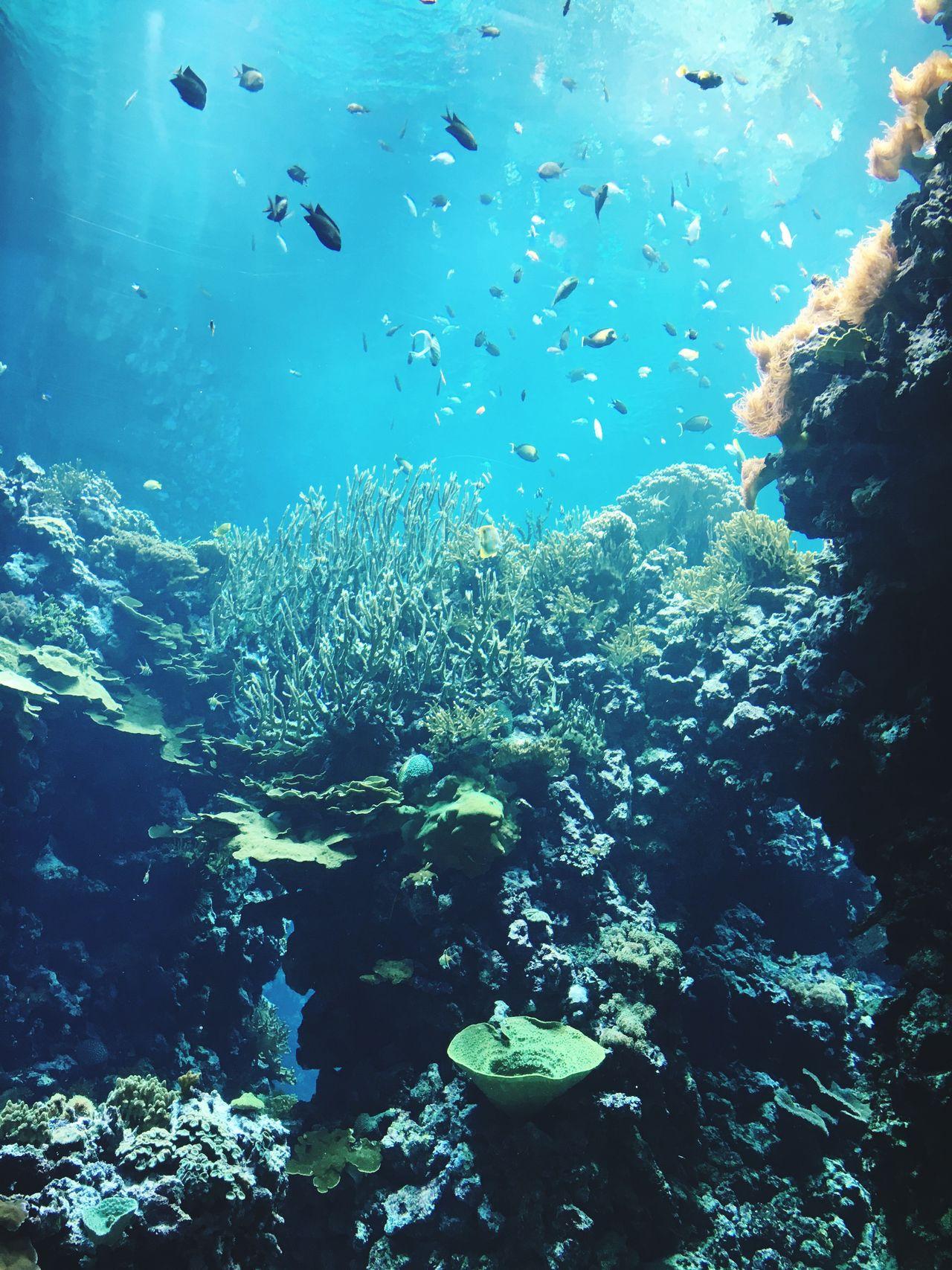 Zoo Burgerszoo Ocean Fish