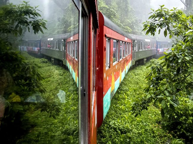 On The Move Check This Out Serra Verde Express in Brazil Rain Forest Better Look Twice The Traveler - 2015 EyeEm Awards Eye4photography  EyeEm Best Shots EyeEm Nature Lover The Following On The Way
