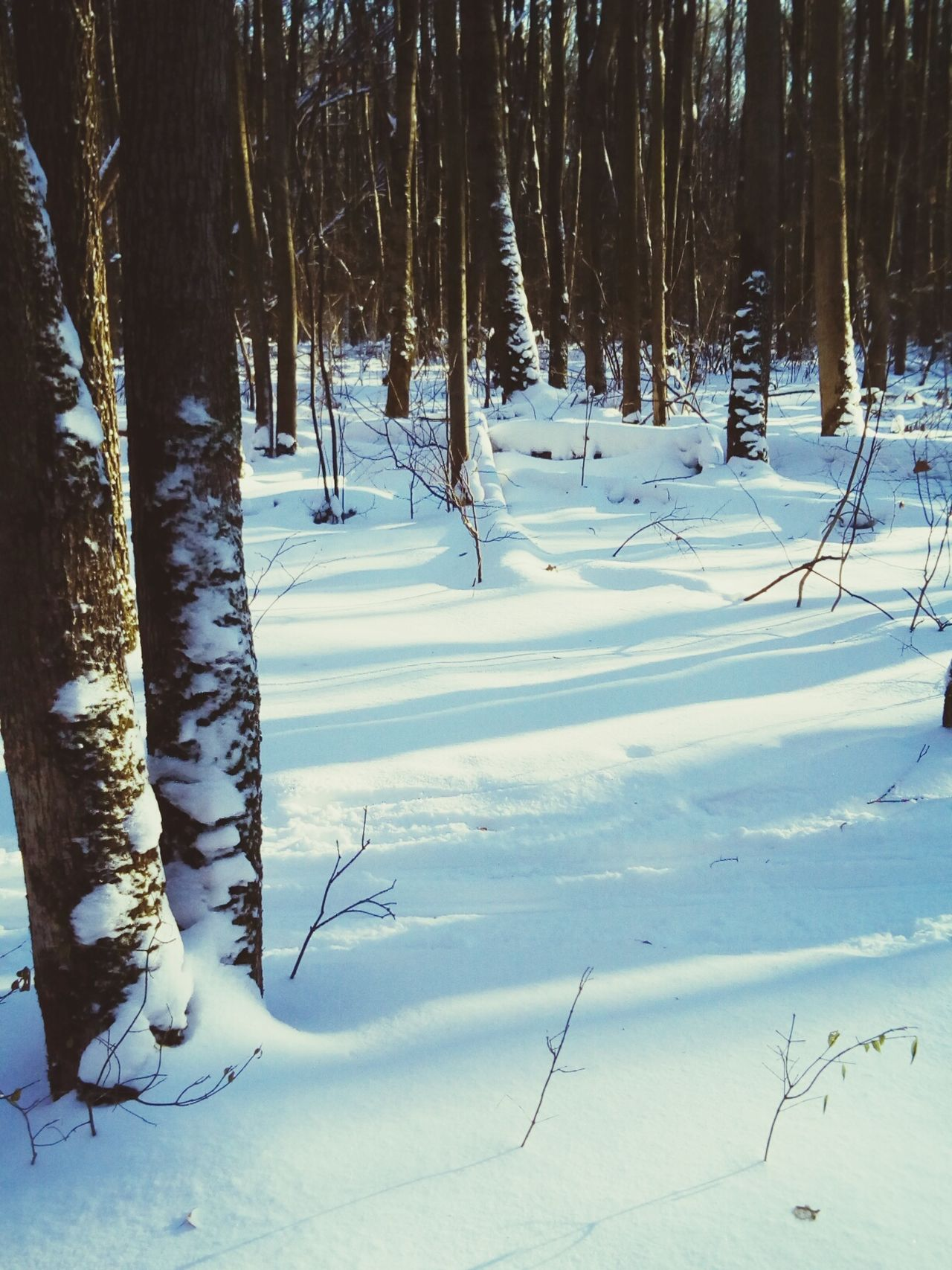 Snow Winter Cold Temperature Tree Beauty In Nature Nature Tranquility Tree Trunk Scenics Landscape Forest No People Outdoors Day Sky Plant The Great Outdoors - 2016 EyeEm Awards Nature_collection EyeEm Nature Lover Shadow Frozen Bare Tree Sunlight Close-up Beauty In Nature