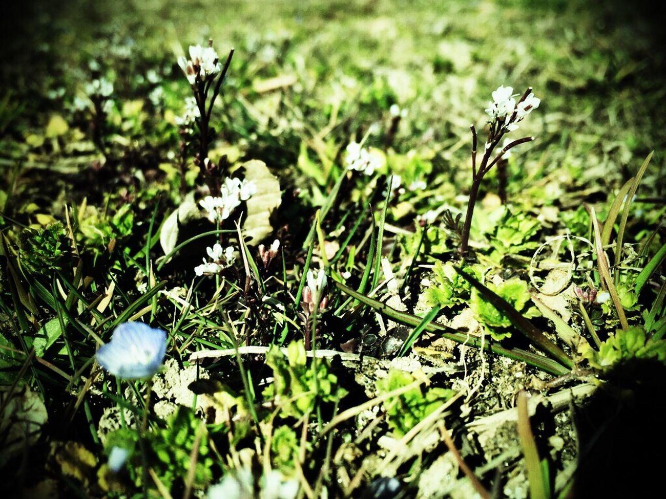 白くて小さい花 なんだろね