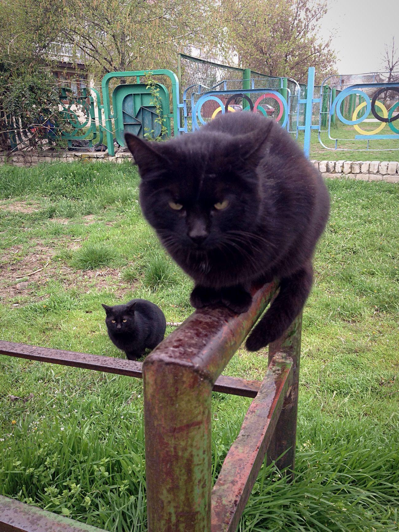 Котик Коты котэ кот Cats Of EyeEm Homeless Cats Cat Cats 🐱 Cat Lovers Cat♡ Cats