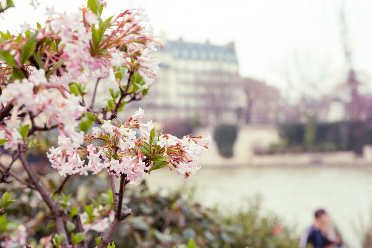 Pink Color Flower City Springtime Outdoors Travel Destinations Cherry Blossom Building Exterior Beauty In Nature Nature Day Cityscape Freshness No People Flower Head Paris Canon Photographie Spring