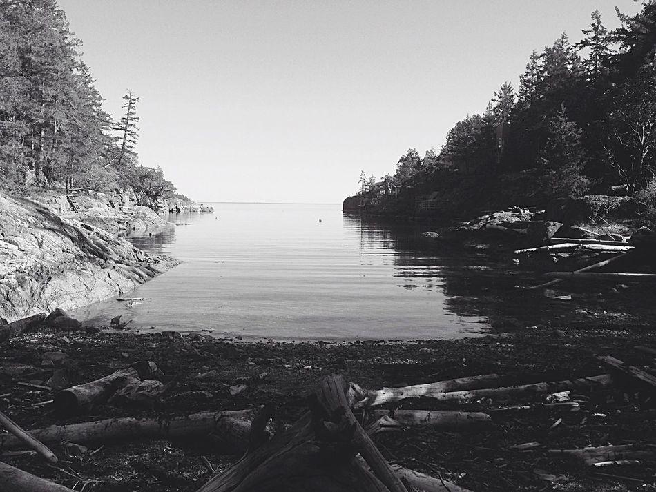 Shadows and light❤️ Shadows & Lights TreePorn Bay Ocean View Ocean❤ HalfMoonBay @Gypsyculu Driftwood