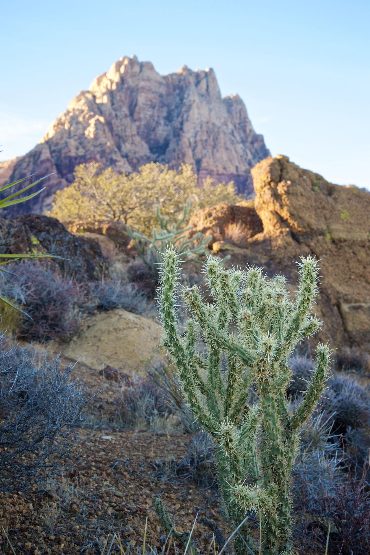 Beautiful stock photos of las vegas,  Beauty In Nature,  Cactus,  Close-Up,  Day