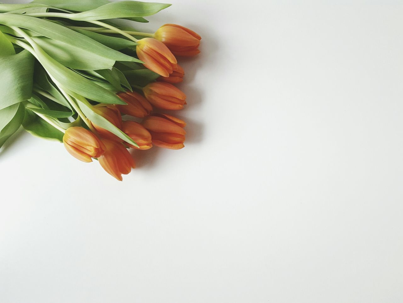 Tulips Showcase: February Flowers Tulips Orange Bouquet Leafes Loose Green Minimalism Framing Nature White Album Present Gift Lying On The Floor Delicious Smell Scent Spring Fragrance Blossoms  Flower Petals Decorating Interior Design Botany