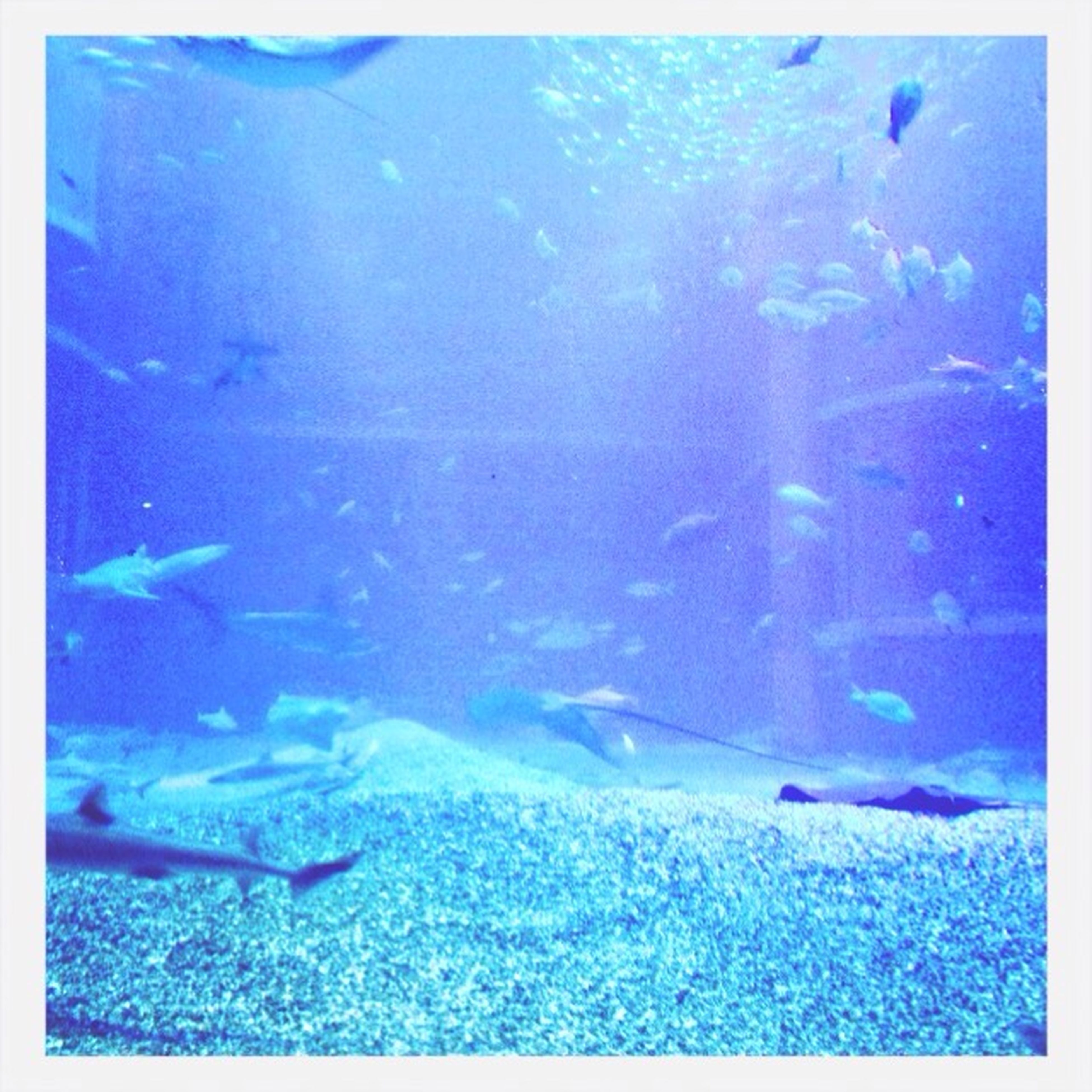 transfer print, blue, auto post production filter, animal themes, underwater, water, swimming, wildlife, animals in the wild, fish, sea, sea life, undersea, nature, high angle view, beauty in nature, school of fish, flying, day