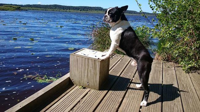 Hello World Taking Photos Enjoying Life Lake Eyemdog Relaxing Relaxing Animal Dogs Dogslife