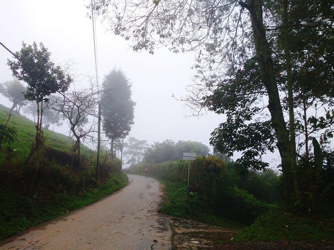 Morning Fog Nature Rainy Season Outdoors Wet Road Bike Ride