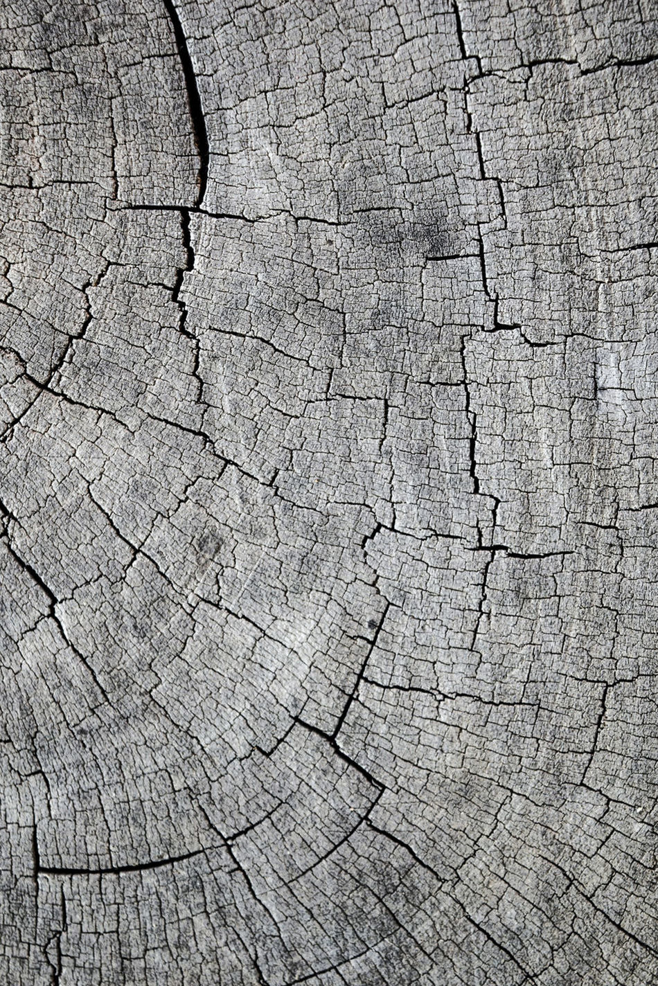 Backgrounds Brown Close-up Cracked Damaged Day Destruction Full Frame Nature No People Outdoors Pattern Textured  Textured Effect Timber Tree Ring Tree Stump Wood - Material Wood Grain