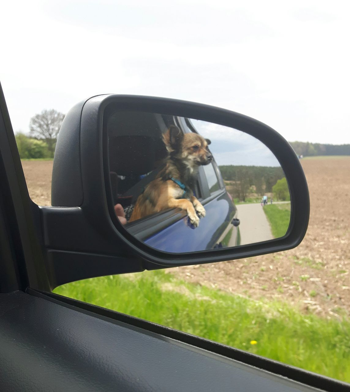 side-view mirror, car, transportation, mode of transport, land vehicle, one animal, reflection, vehicle mirror, mirror, photographing, animal themes, road trip, day, car interior, nature, one person, dog, real people, photography themes, window, driving, road, sky, pets, camera - photographic equipment, outdoors, grass, mammal
