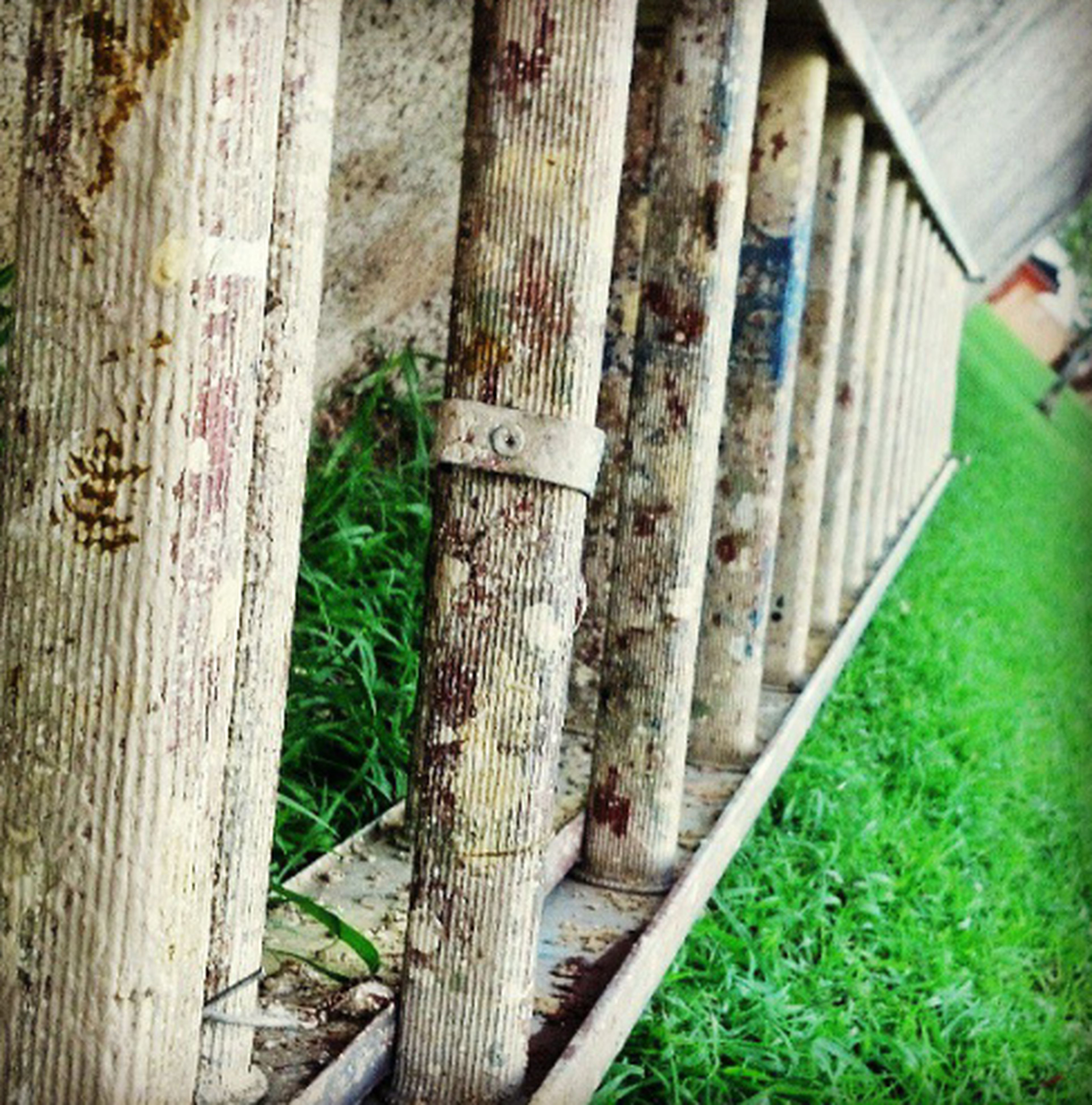 built structure, architecture, fence, wood - material, building exterior, protection, grass, safety, metal, wooden, day, outdoors, green color, security, no people, railing, animal themes, wall - building feature, one animal, plant