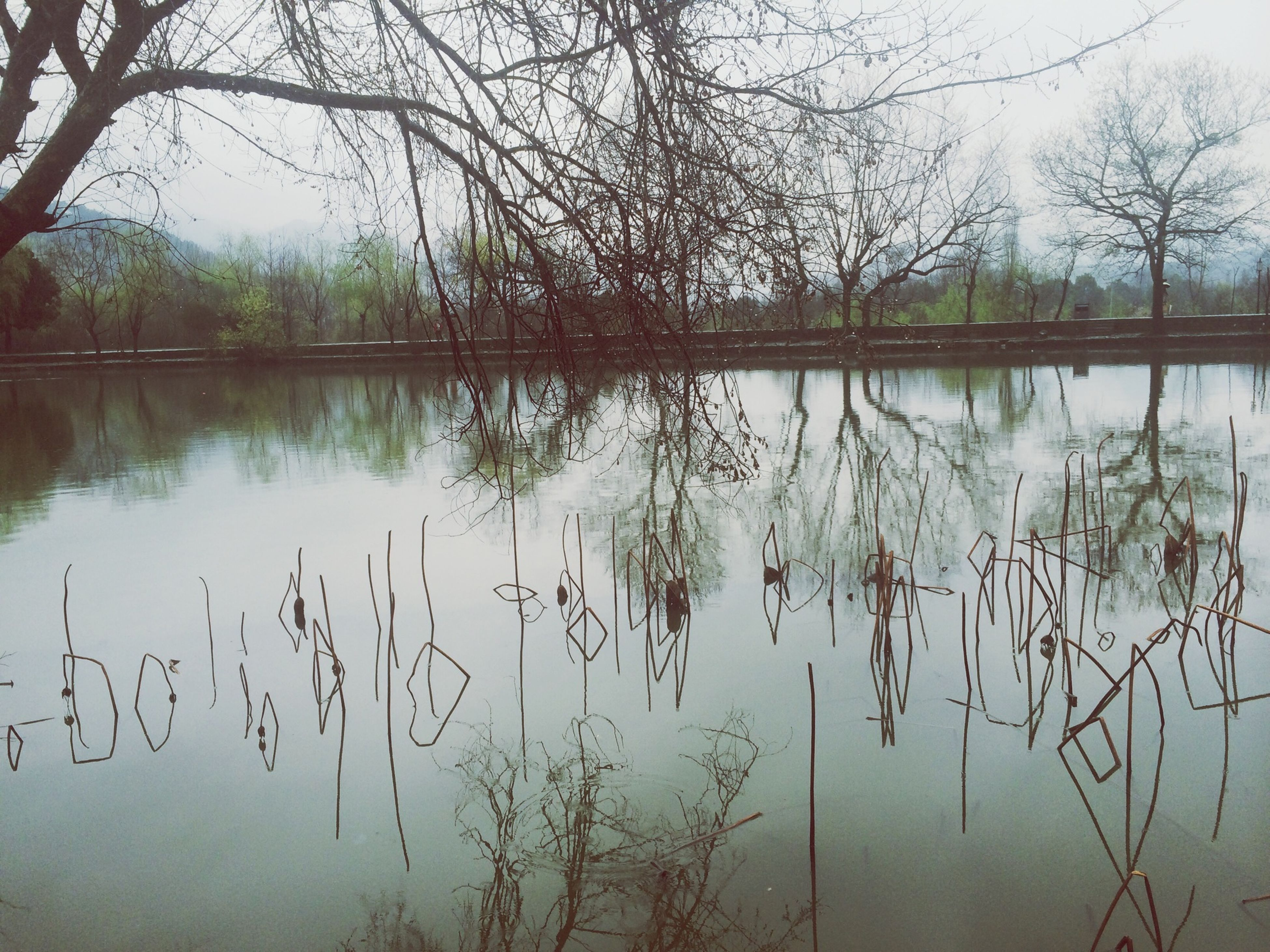 water, tree, lake, branch, reflection, tranquility, nature, tranquil scene, bare tree, beauty in nature, scenics, sky, growth, waterfront, plant, standing water, river, day, outdoors, idyllic