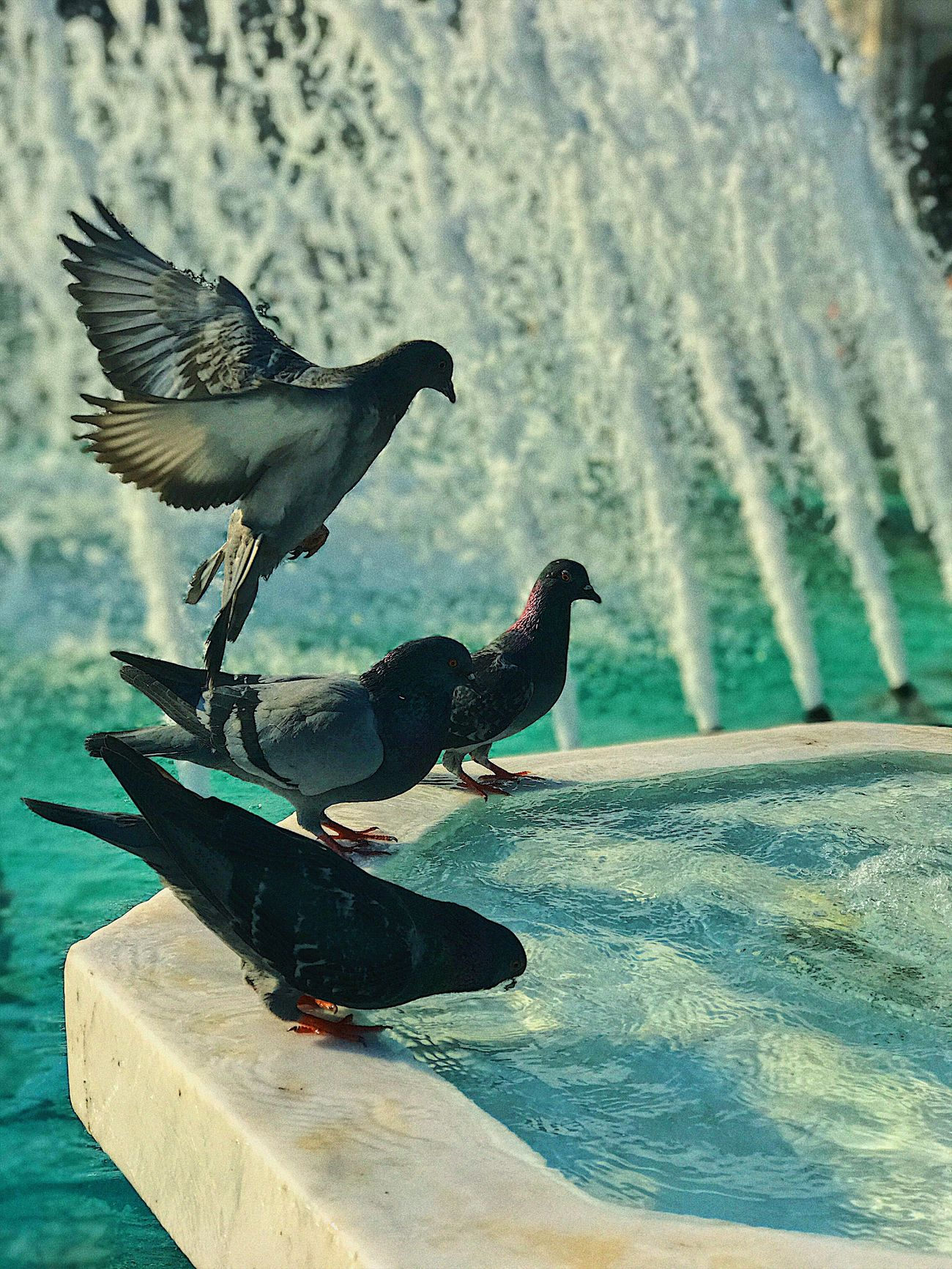 Bird Water Nature Animals In The Wild Animal Themes Animal Wildlife Raven - Bird Perching No People Day Outdoors Close-up First Eyeem Photo