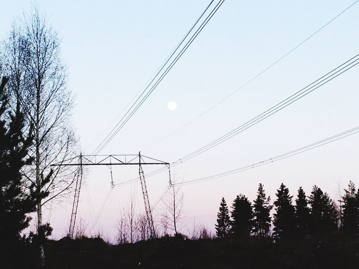 Day Scenics Plant Beauty In Nature Grass Landscape Cable Power Line  Tree Connection Power Supply Low Angle View Electricity  Electricity Pylon No People Sky Nature Silhouette Clear Sky Outdoors Technology Beauty In Nature (null)Clear Sky