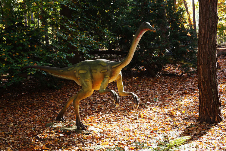Dinosaurs in the park of the Oertijdmuseum Animal Autumn Day Dinosaur Dinosaurs Extinct Forest Nature No People One Animal Outdoors Prehistoric Tree