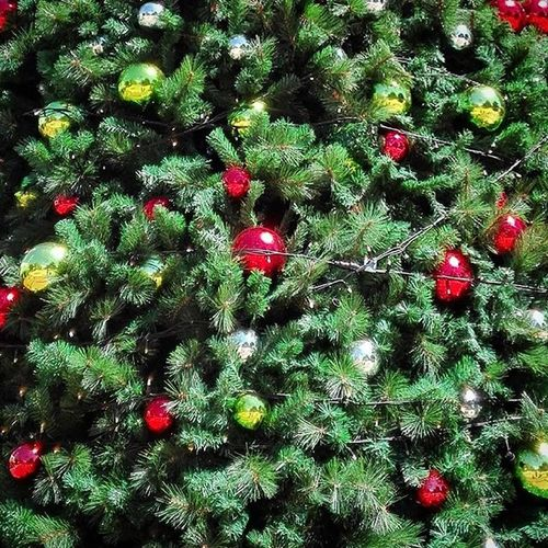Ss_green_04 Green Xmastree Christmastree Christmas Christmasdecorations Xmas Xmasdecorations Hastings Bbft_xmastrees Tv_simplicity Minimalgram Minimal_mood Minimal_int Minimal_nio As_christmas Spc_holidays 9vaga_chris9 Tvc_mc_green Ptk_minimal_red_2