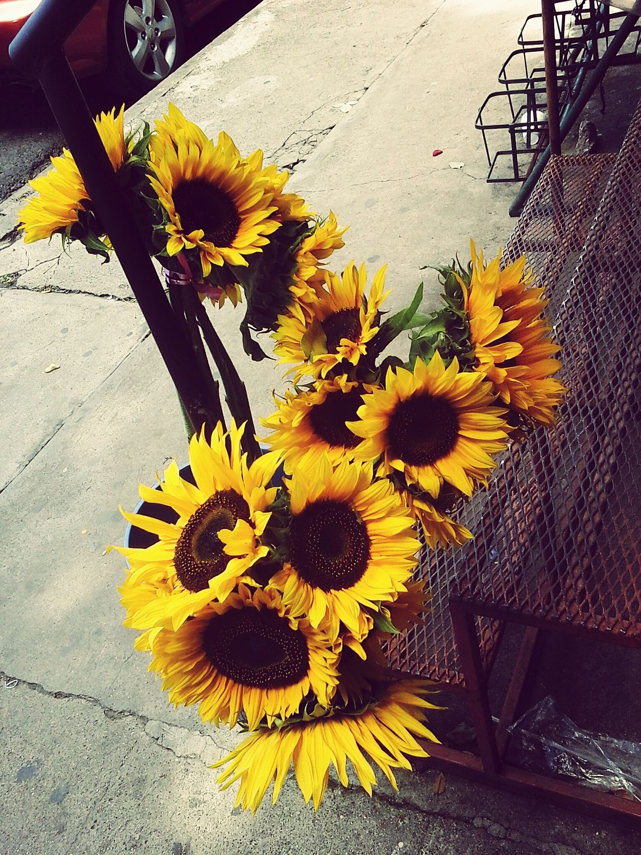 Flower Yellow Flower Head Nature Sunflower Petal Fragility No People Outdoors Freshness Beauty In Nature Close-up Day Bouquet Black-eyed Susan Flower Arrangement Beauty Is In The Eye Of The Beholder Beautyinnature  Rear View El Salvador