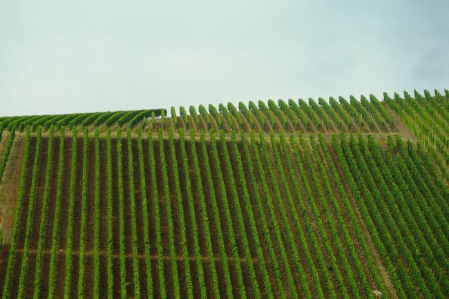 My Eyes My Franken In A Row Rows Of Things Green Color Lines, Colors & Textures Abstract Pattern, Texture, Shape And Form Fine Art Still Life Urban Geometry Muster Mix My Eyes My Nature Nature Vineyard Vineyards  Landscapes Greenery EyeEm Best Shots EyeEm Masterclass