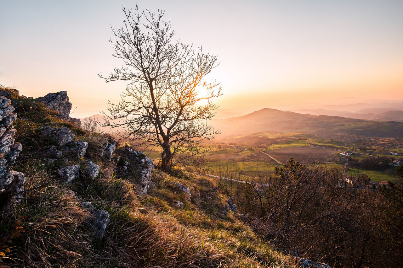 Bare Tree Beauty In Nature Day Grass Landscape Mountain Nature No People Outdoors Scenics Sky Sunset Tranquil Scene Tranquility Tree