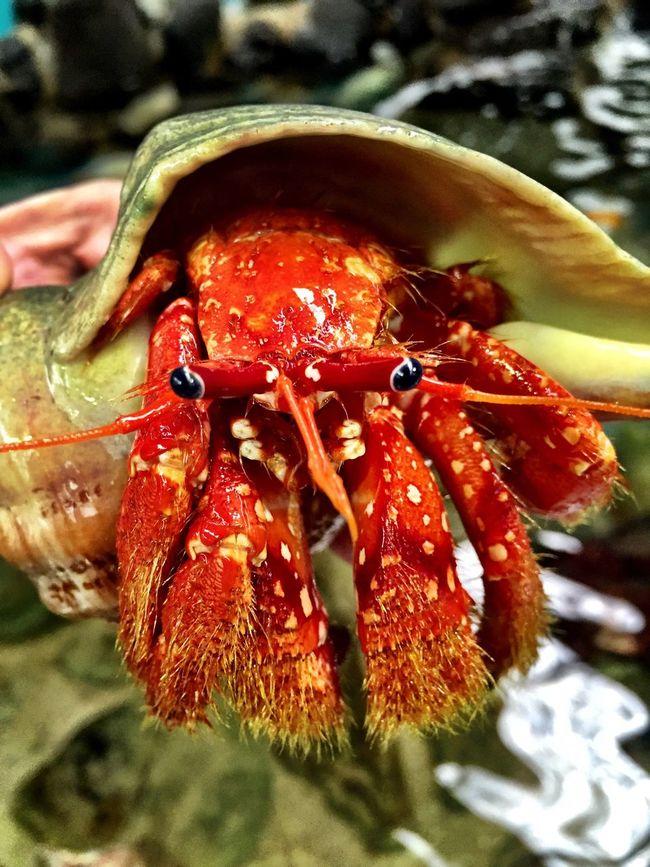 Hermit Crab Nature_collection Adventure