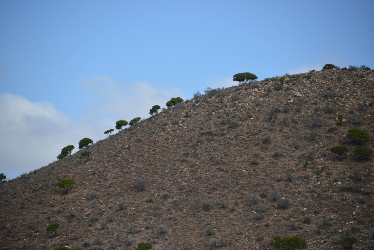 Acacia Tree Africa Beauty In Nature Blue Sky Hill Trees Trees And Sky